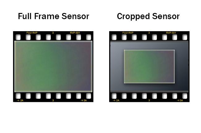 Crop sensor