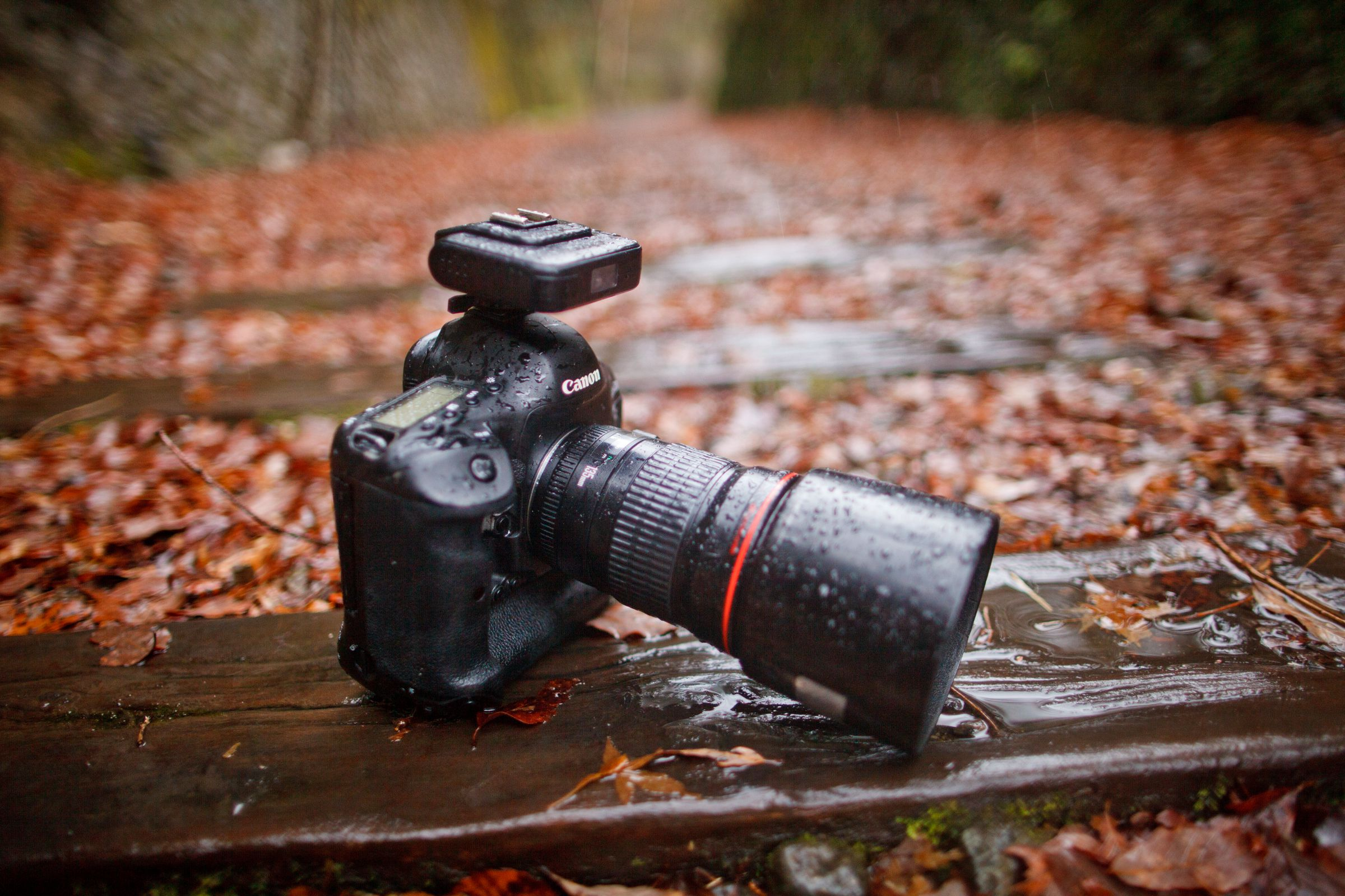 How to protect camera gears during monsoon – A must-read for all photographers.